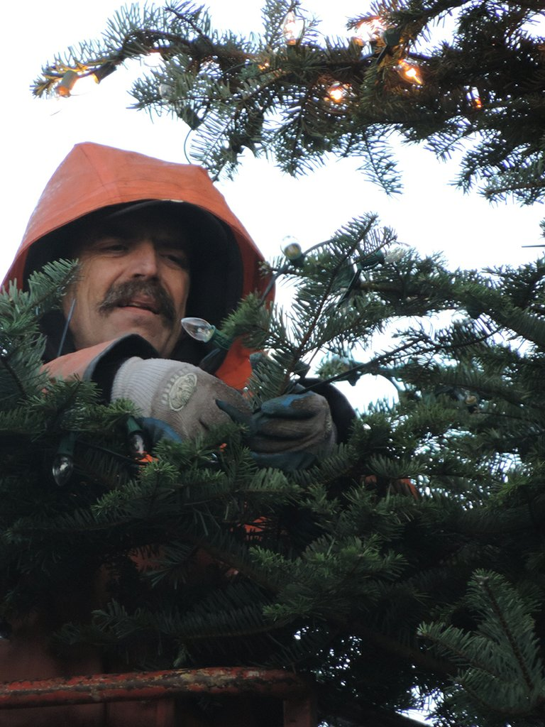 DENNIS MILLER of Hollywood Lighting bundles up as he stands on the high lift and attaches light strands to the holiday tree at Second and State. Working tip to base, Miller expects to conclude the work by Wednesday morning.