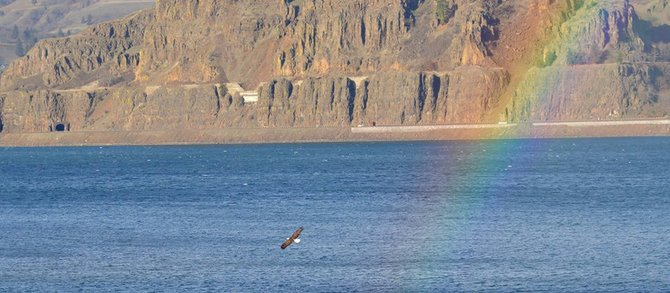 Winter means bald eagle season in the Gorge, where sights like this are never far away.
