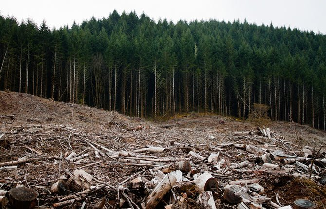 An Oregon clearcut.
