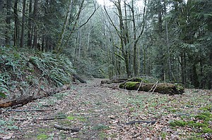 The Historic Columbia River Highway just west of Lindsey Creek sleeps under a blanket of moss while cars whiz by on Interstate 84 just a few hundred feet away. The Oregon Department of Transportation recently submitted an application to the county to begin preliminary work this spring on restoring a section of the highway between Wyeth and Starvation Creek, which will be used as a hiking and biking trail.