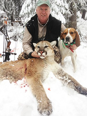 On a recent hunt in the Riggins area, Tom Sommer, proprietor at Oscar's Restaurant and Brodock's Lounge, found a companion for the mounted bear that bears the restaurant's name. He said this cougar, which he nabbed while hound hunting with a friend, might end up above the front door — overlooking the foyer where Oscar now resides.  It's on the way to the taxidermist.