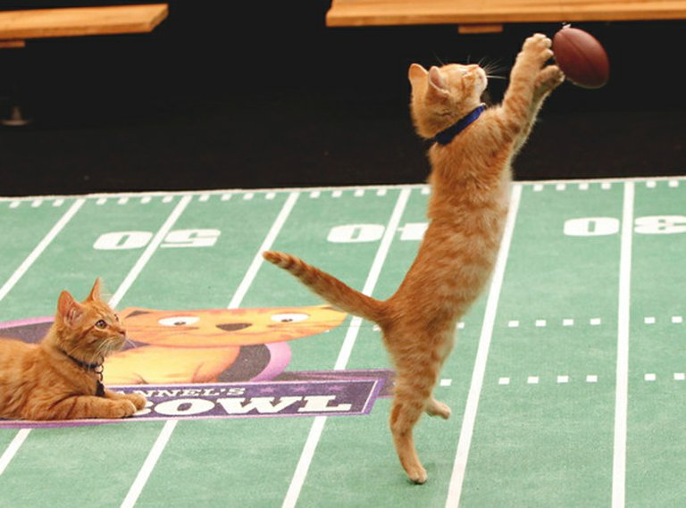 The Super Bowl will take center stage this coming Sunday, and Animal Planet's Puppy Bowl will have its 10th annual event. But not to be outdone, kitties will also have their day on Super Sunday as Hallmark Channel will for the fourth time air its Su-Purr Bowl at noon, 3 p.m., 6 p.m. and 9 p.m. this Sunday.