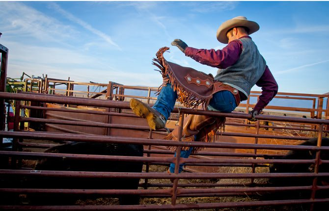ERIC HYATT jumps the railing into a chute where calves have bunched up to move them toward the squeeze chute­.