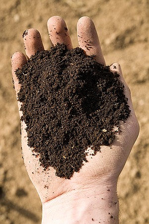 PAY MORE attention to your soil for a better garden outcome.