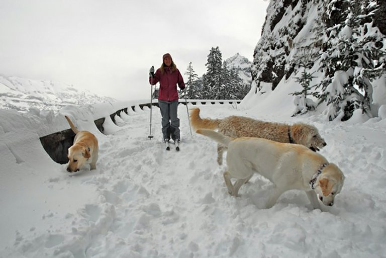 Trudy Klinger and her dogs explore the Mosier Twin Tunnels trail