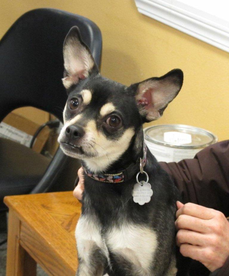 Pet of the Week: Jax