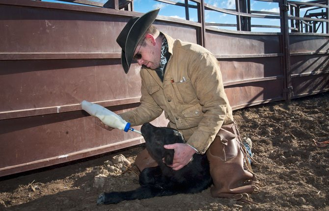 MAUPIN RANCHER Keith Nantz uses a tube and bottle to feed a newborn calf rejected by its mother. He milked another new mother to get Colostrum, which is high in nutrients and antibodies, for the new baby. The calf will be bottle fed for several months but will end up weighing less than its peers due to the lack of maternal nurturing.