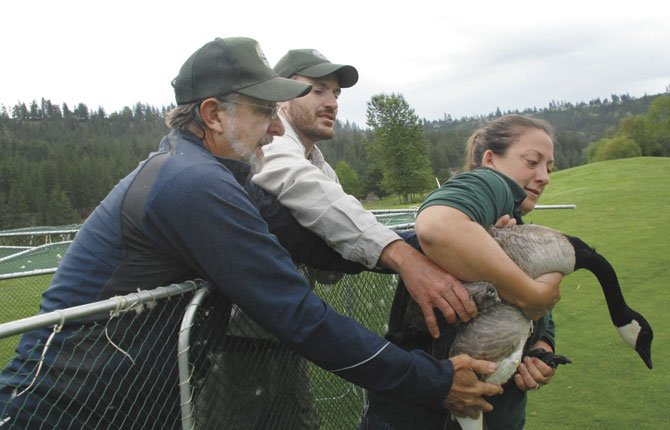 Washing-ton Fish 