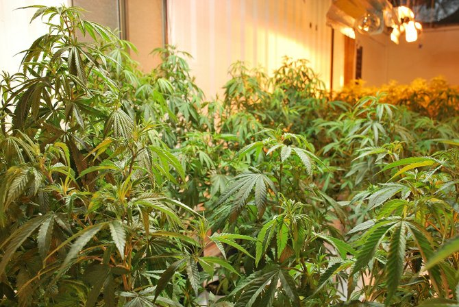 The Washington State Liquor Control Board have announced the results of a lottery used to determine which applicants for retail marijuana licenses would be able to continue the licensing process. Due to the sparse amount of applicants who submitted complete information to the Liquor Control Board within Klickitat County, no lottery was needed for the area and four applicants will be able to continue on with the process.