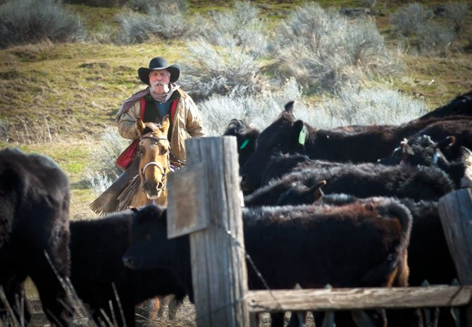 DUFUR RANCHER Mike Filbin works a herd into a tight group, keeping them bunched on a gravel road between fence lines on Tygh Ridge before moving them over Highway 197 to his corrals.