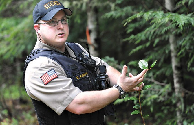 Benton County Sheriff's deputy Brent Iverson shows salal, a leafy Northwest plant prized for its shelf life in floral arrangements, which grows in the forest southwest of Philomath, Oregon in April of 2014.