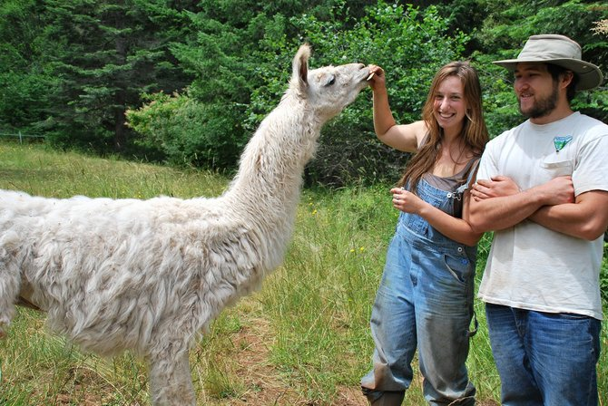 Daniella Dipol and Colin Vaughan feed Bianco the llama a snack at Stonework Farm in Snowden. Dipol and Vaughan were previously archaeologists before they committed to helping John Washburn, a merchant marine, start the farm this year. Stonework Farm is a new addition to the White Salmon Farmer's Market. Below, feather earrings made by Daniella Dipol will be for sale along with fresh vegetables grown.
