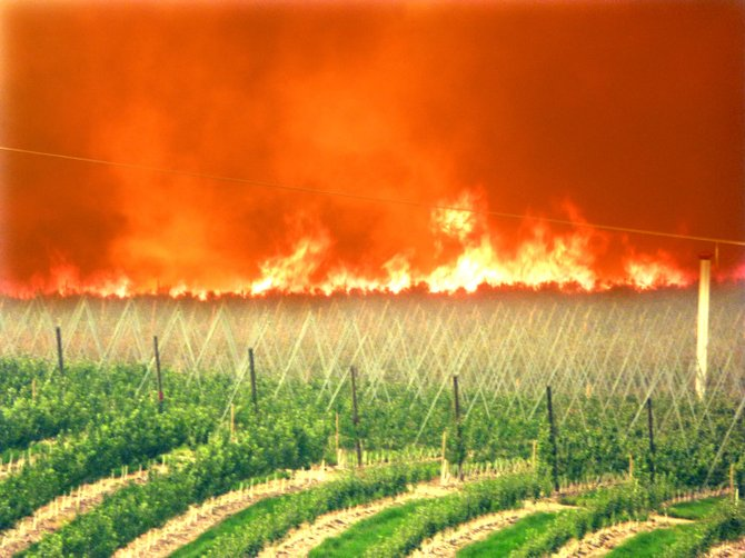 A wall of flames approaches one of Gebbers Farms' orchards near Pateros on Friday.