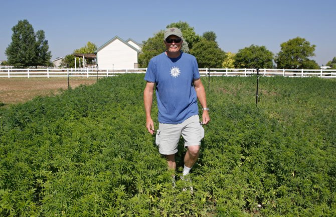 Jim Denny of Brighton, Colo., inspecting the growth of a field of hemp on his property on July 3. Denny learned the hard way that he needed neighbors' permission before growing hemp.