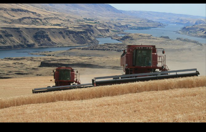 HARVEST ON the Kaser Diamond K farm east of The Dalles finishes up on a field overlooking the Columbia River near Biggs. The combine operator on the left is A.J. Mead and on the right is Ivan Petroff.