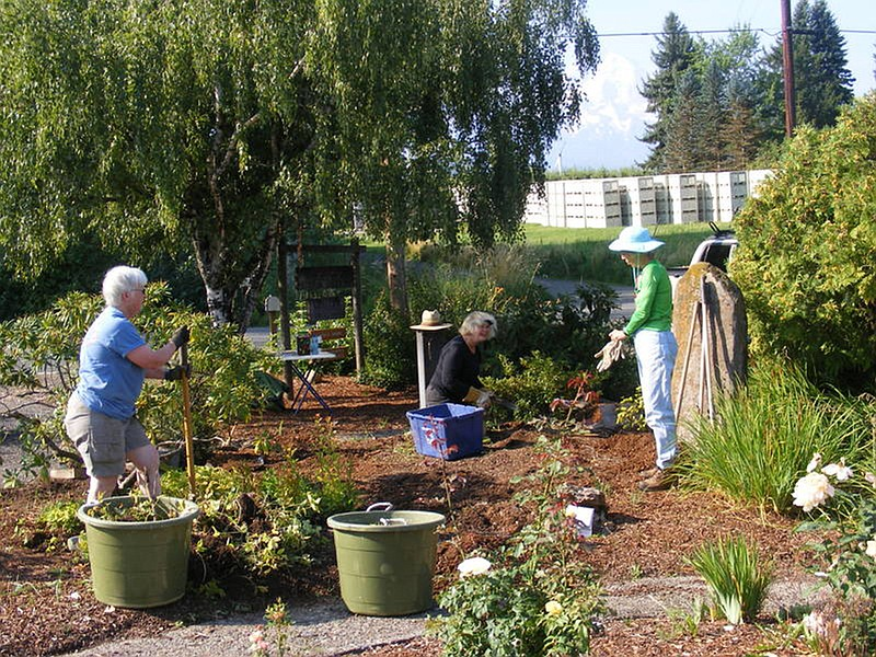 AFTER Restoration The Flowerbeds Are Trimmed And Neat. Members Of The  Parkdale Garden Club,