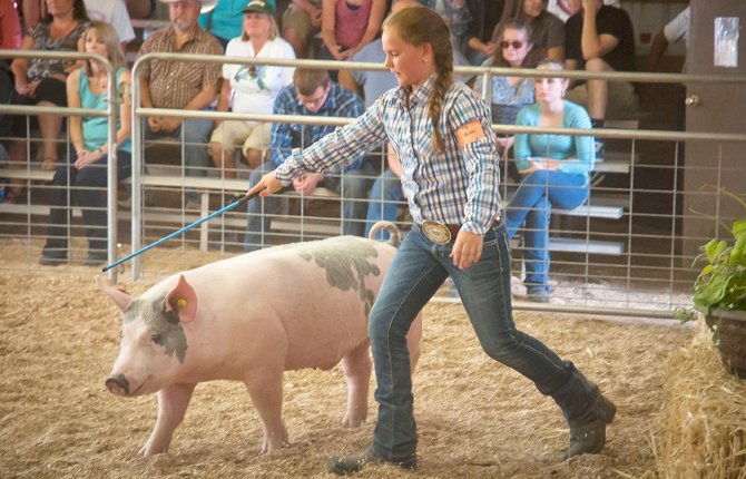 Lindsey Jones moves a pig around the show ring during the 4-H grand champion all around showmanship contest Aug. 23.