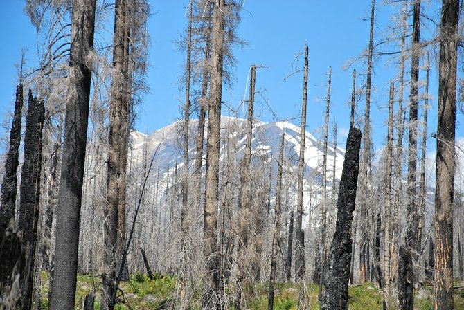 Mt. Adams can be seen between burnt trees at the site of the Cascade Creek Fire that happened in 2012.