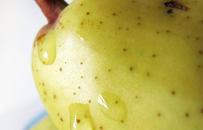 IT IS ONLY possible to ripen mature pears off the tree. Horticulturist Lynn Long explains how to do that.