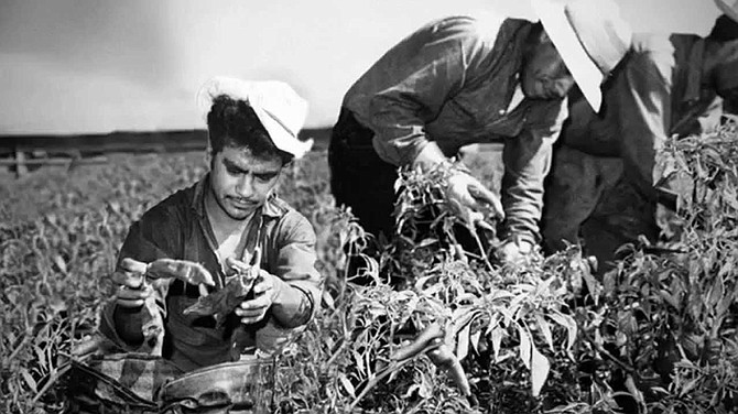 "UNTIL FEB. 15: ""Bittersweet Harvest: The Bracero Program 1942 – 1964"" is a moving bilingual exhibition organized by the Smithsonian's National Museum of American History."