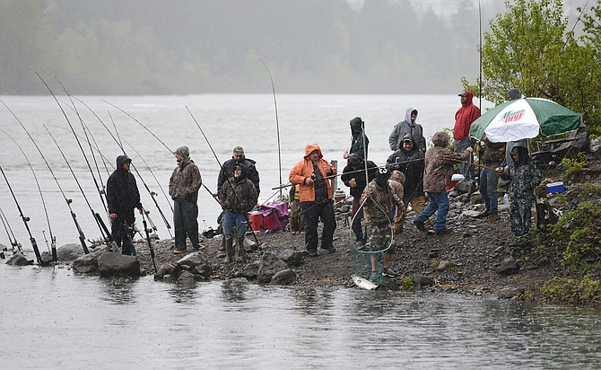 Strong return of spring chinook anticipated hood river news for Hood river fishing