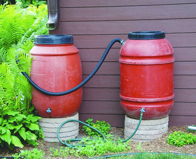 Collecting rain in rain barrels when it is plentiful and storing it until it is needed is an effective way to manage water for the landscape.