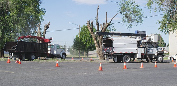 Crews from a Prosser firm are removing the large trees on the Sunnyside School District's Lincoln School building property along South Sixth Street and East Lincoln Avenue. About 20 trees will be removed due to danger from falling branches due to black rot in the trees.