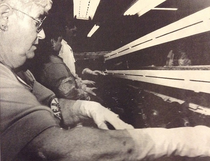 August 16, 1995: Helen White, of Mount Hood, sorts Red Crimson pears at that Stadelman Fruit, Inc., packing house earlier this week. The valley's orchardists and packing plants went into action this week as the fall harvest begins.