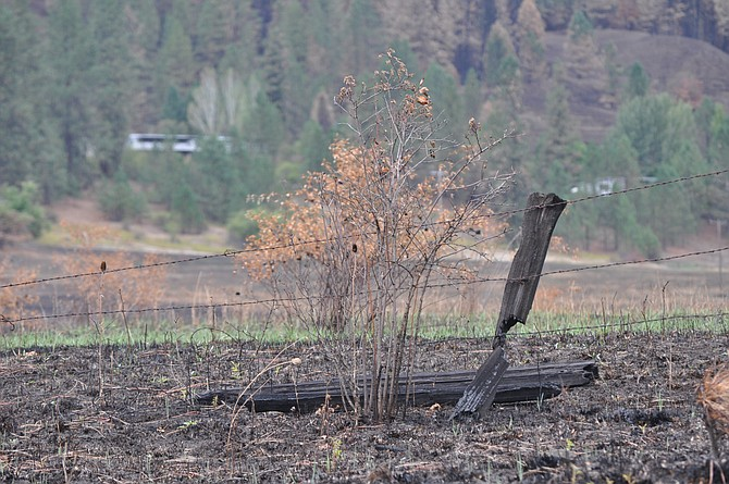 Fenceline damaged, destroyed on Woodland Road during the Aug. 14 Lawyer 2 fire event at Kamiah.