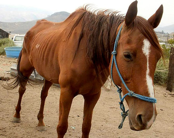The Nourishing Hand animal rescue has closed its doors following the removal of four horses by the Okanogan County Sheriff's Office earlier this week.
