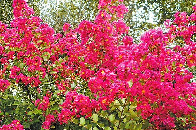 This pink-flowering crap <a class='fecha' href='http://wallinside.com/post-55845641-diggin-it-gardening-in-the-new-year-northwest-boomer-and-senior-news.html'>read more...</a>    <div style='text-align:center' class='comment_new'><a href='http://wallinside.com/post-55845641-diggin-it-gardening-in-the-new-year-northwest-boomer-and-senior-news.html'>Share</a></div> <br /><hr class='style-two'>    </div>    </article>   </div></div></div></div> <aside id=