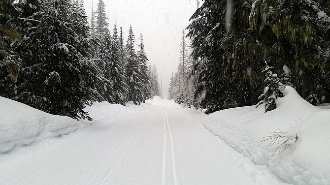 SNOW FALLS on the Teacup Nordic Trail just north of Mt. Hood Meadows.