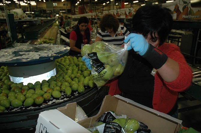WORKERS stow pears at Diamond Fruit packing house in Odell. A bill to raise Oregon's minimum wage in three regional tiers — with Hood River County in the middle group — has cleared the Senate and moved on to the House for a floor vote.