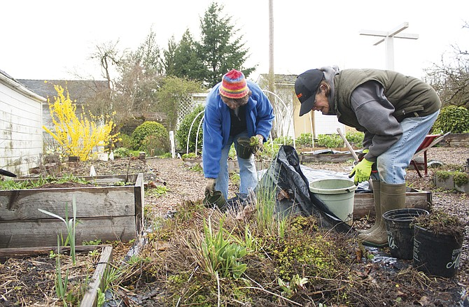 Marsha Graciosa, left, and Linda Vognild, Master Gardener volunteers, pull weeds at Brunk House on Tuesday. A group of volunteers work at the historic home each week to keep the house clean and the garden in good shape.