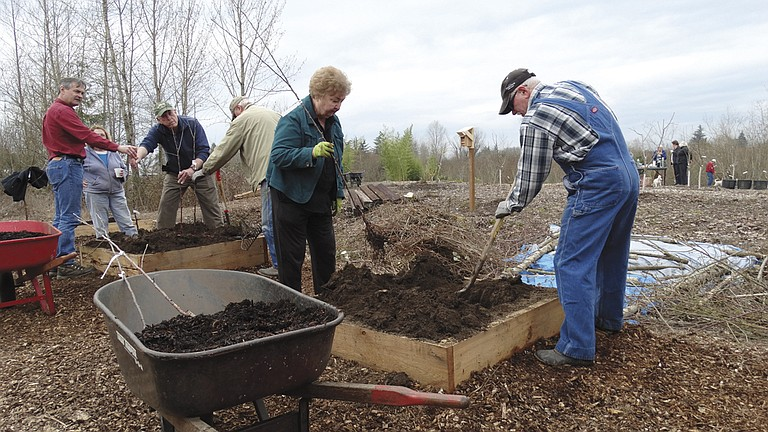 Independence City Council President Nancy Lodge readies a fuji apple tree, one of three that will be planted in a hole she dug, with Rick Schack in Inspiration Garden.