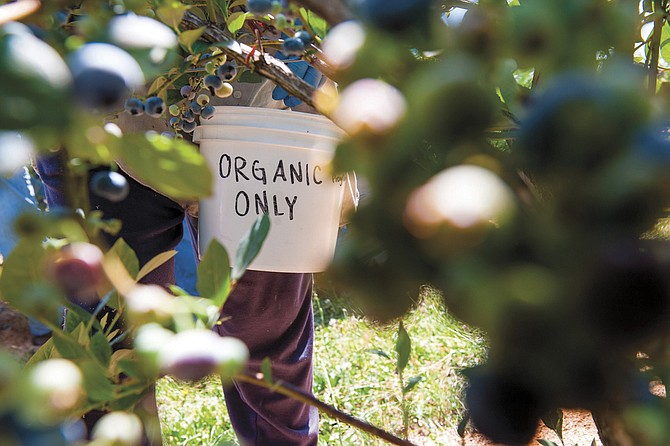Organic gardeners should be monitoring the garden often so they can get on top of problems quickly.