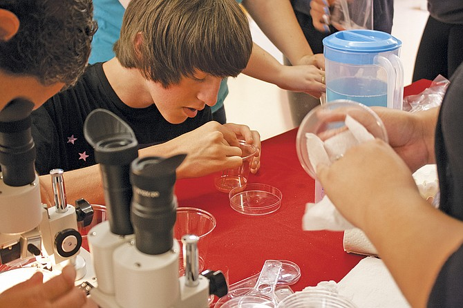 Ninth-grader Sage Arnesen carefully lifts strawberry DNA from a solution to look at under a microscope.