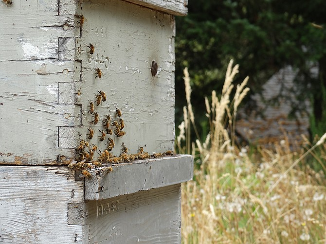 "Now is a good time for homeowners in Oregon to take steps that will ""bee friendly"" to a very important ally in the insect world."