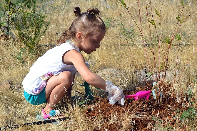 RAYLEE CAMPBELL, a Blossoms Bilingual Preschool student, nurtures a sapling with mulch at Nichols Natural Area last Wednesday. Columbia Riverkeeper and local partners are diving into a habitat restoration project on the Hood River waterfront.