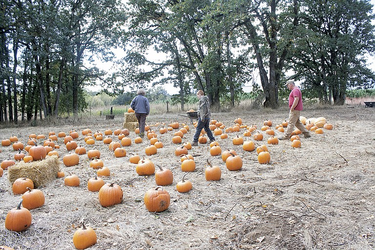 Dallas residents Jennifer Hodgdon, left, Arron Hodgdon and Scott Hodgdon search for a medium-sized pumpkin on Saturday at Beal Pumpkin Patch.