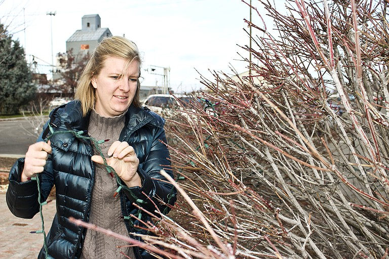 Prosser Chamber of Commerce Director Larelle Michener strings lights on the bushes surrounding the Prosser Depot Square for the family Christmas Festival. The lights will officially be lit Sunday at 4 p.m.