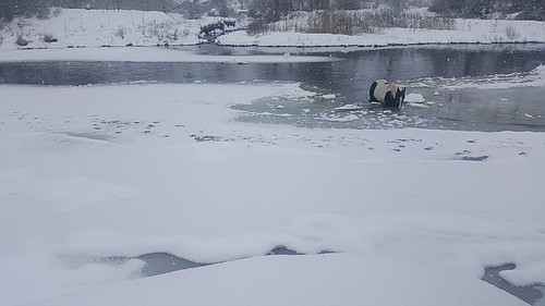 Contributed Photo/Idaho County Sheriff's Office