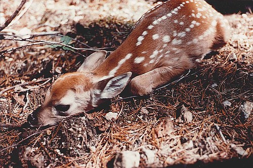Contributed photo/Roger Inghram
