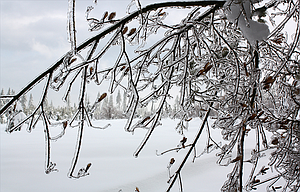 Ice coats a tree above the Columbia River during recent winter storms. Severe winter weather creates challenges for those without homes.