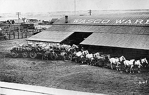 """Lucille Stephens, Terray Harmon, Art Monroe, Gary Conley, John C. Wood, Dale Roberts and Becky Roberts all contributed to this report. Information with the photo is """"The Dalles Wool Trade Center 1864-1894."""" There is another """"Wasco Warehouse"""" in Shaniko, with the same writing on the roof, which still stands. The Dalles Warehouse was located west of the flour mill, near where the old Tum-A-Lum building is now and north of Second Street, said Terray Harmon. LaVerna Bolton Harmier and others noted that the close resembles the warehouse in  Shaniko, """"The wool capital of the world,"""" which, at the turn of the century, had the largest wool warehouse in the state, marketing four million pounds in 1901. John C. Wood noted that it even looks like there are sheep corrals in the background.  Art Monroe said the Shaniko-Bend Silverlake Fast Freight is pictured. Gary Conley noted that the teamsters look like they had just brought in a load of wool to the warehouse. A lot of grain and other stuff was also delivered and sold out of the warehouse, he said. Goods were loaded onto the railroad at the other end of the warehouse, he added. The houses in the background are where the cherry packing plant is now and the corral is in the area of Taylor Street.  A scan of the print, part of the Wilma Roberts collection, was submitted by Casey Roberts. Two websites discuss the Wasco County wool warehouses: oregonhistoryproject.org/articles/historical-records/wool-buyers-at-shaniko/ and www.legendsofamerica.com/or-shaniko.html"""