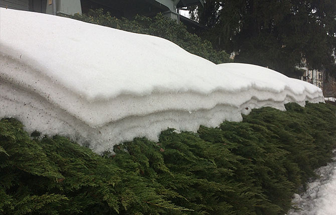 Like rings on a tree, the numerous storms The Dalles has endured for the past two-plus months are shown in these layers of snow on a row of shrubs along West Sixth Street. The layers have been revealed as the snow slowly melts. Warmer days, with highs in the mid-40s, are in the forecast.