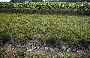 A dry water ditch next to a cornfield in Cordova, Md., could have fallen under EPA regulations with expanded water protection rule that has been paused by court and could be rescinded by Trump adminisatration.