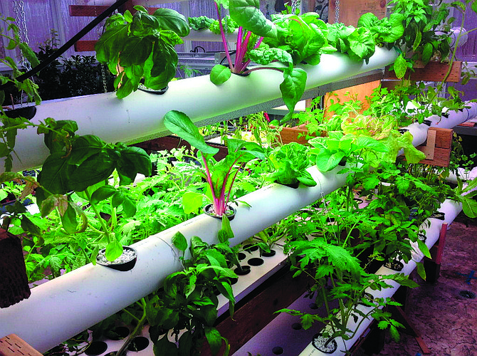 Hydroponics Speed Vegetables To Your Table Polk County