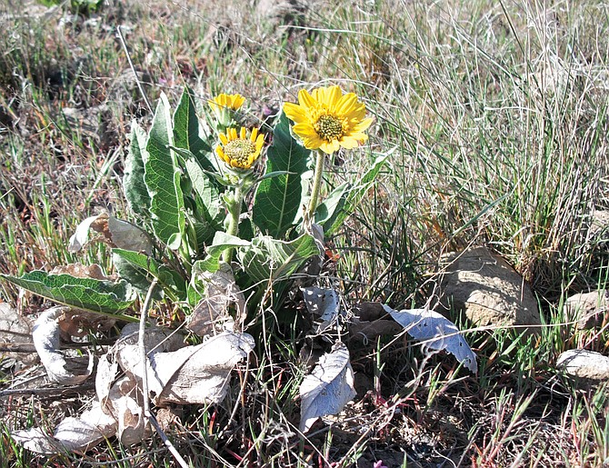 Wildflowers like these are among the flora to be discovered on hikes throughout the region.
