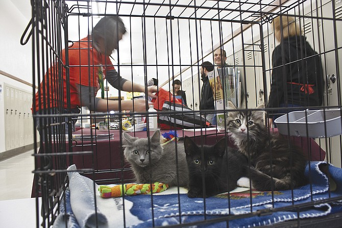 Pets need to be ready for emergencies, too.